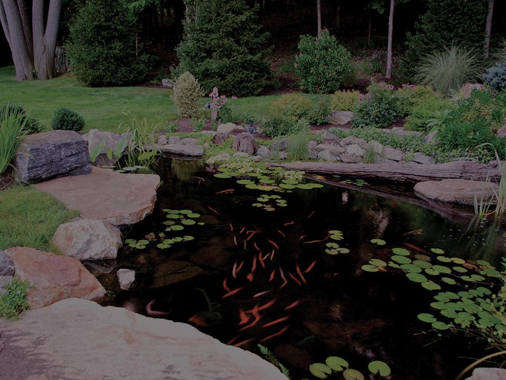 Ecosystem Ponds